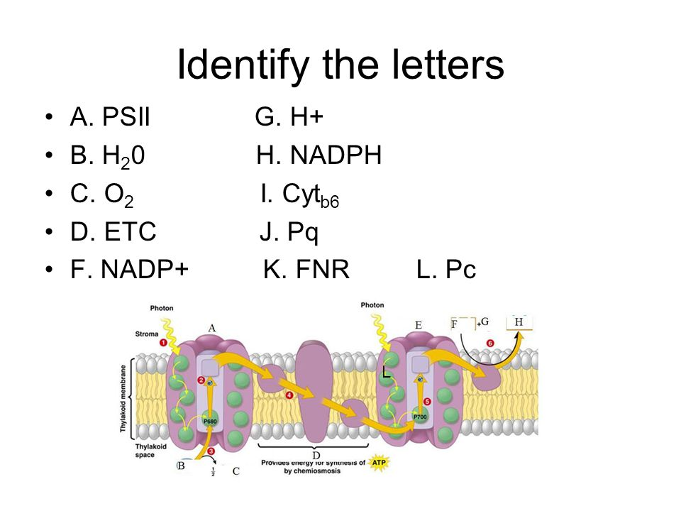 Identify the letters A. PSII G. H+ B. H20 H. NADPH C. O2 I. Cytb6