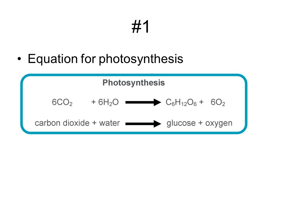 #1 Equation for photosynthesis