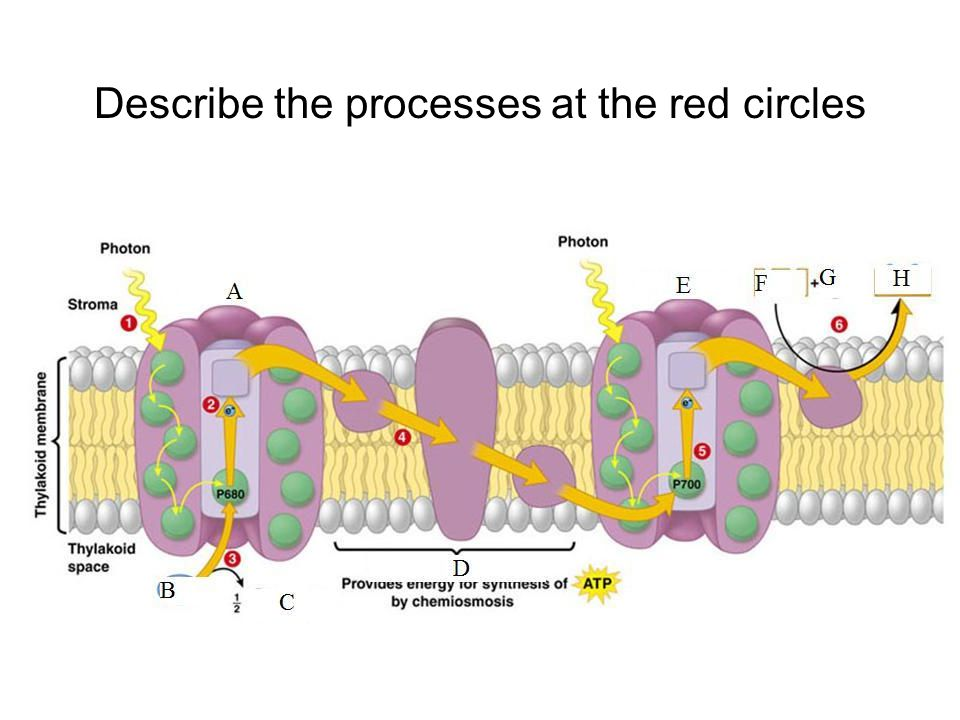 Describe the processes at the red circles
