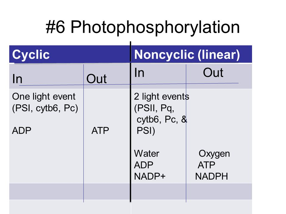 #6 Photophosphorylation