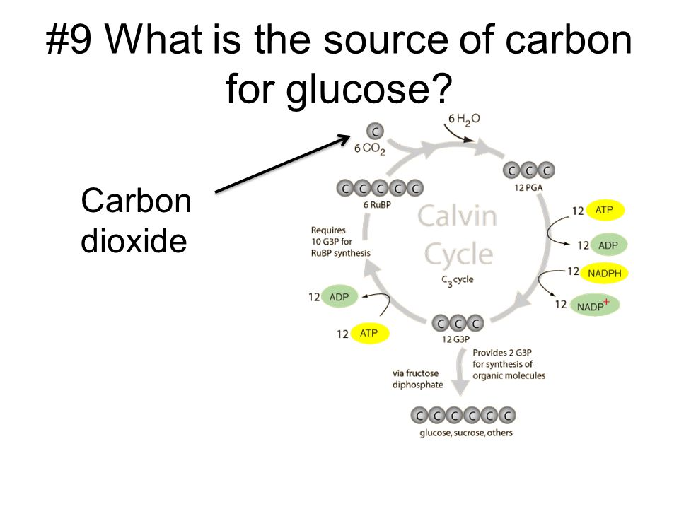 #9 What is the source of carbon for glucose