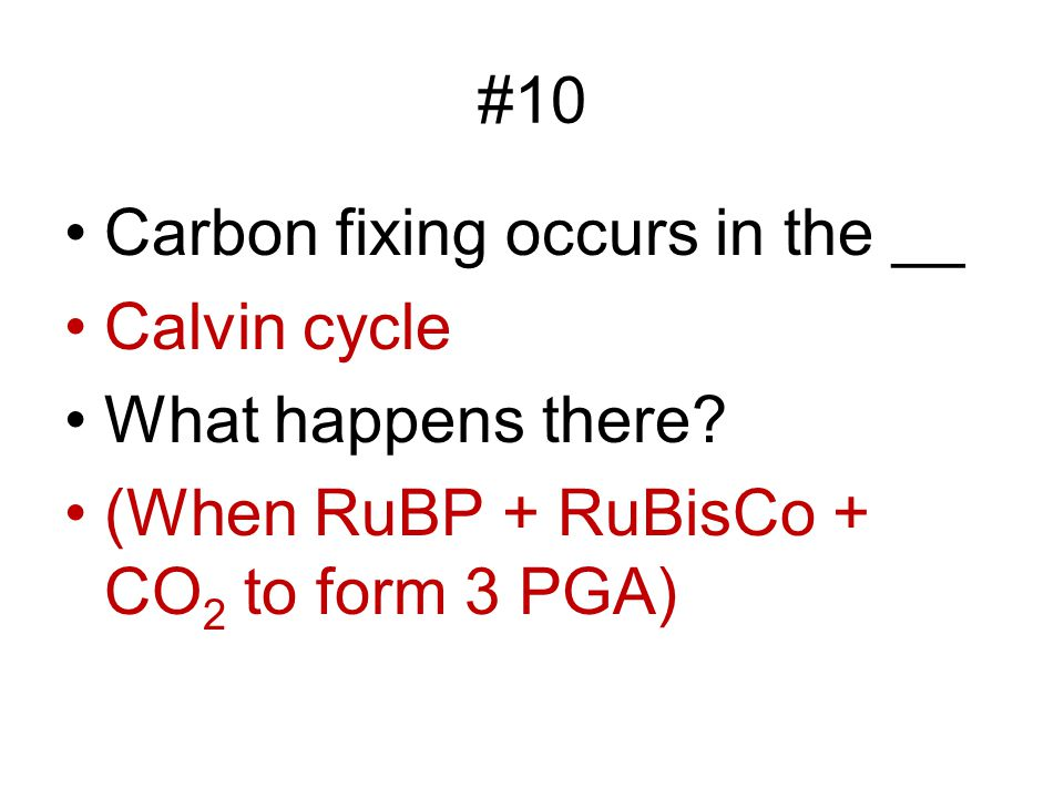 #10 Carbon fixing occurs in the __. Calvin cycle.