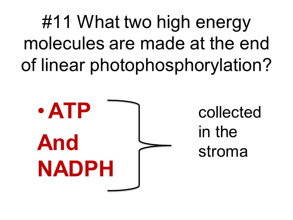 #11 What two high energy molecules are made at the end of linear photophosphorylation