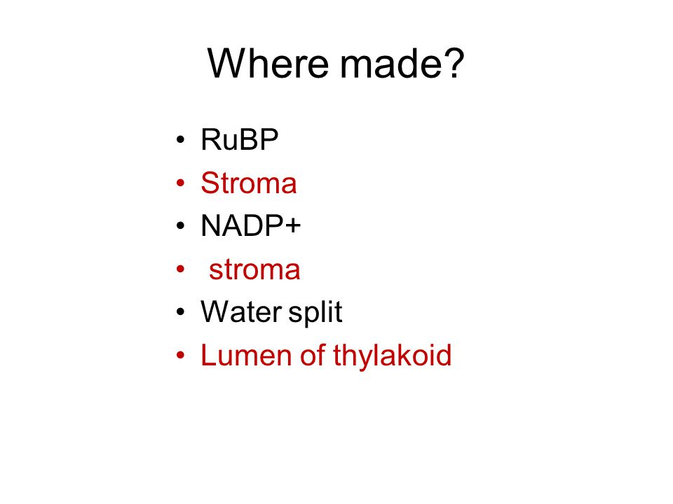 Where made RuBP Stroma NADP+ stroma Water split Lumen of thylakoid