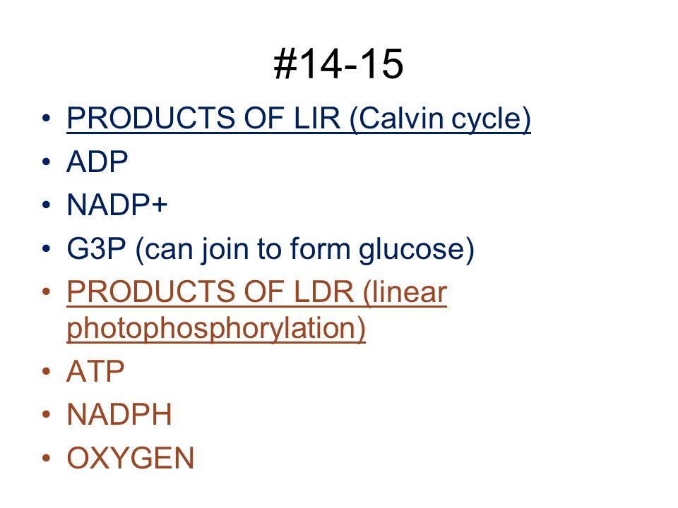 #14-15 PRODUCTS OF LIR (Calvin cycle) ADP NADP+