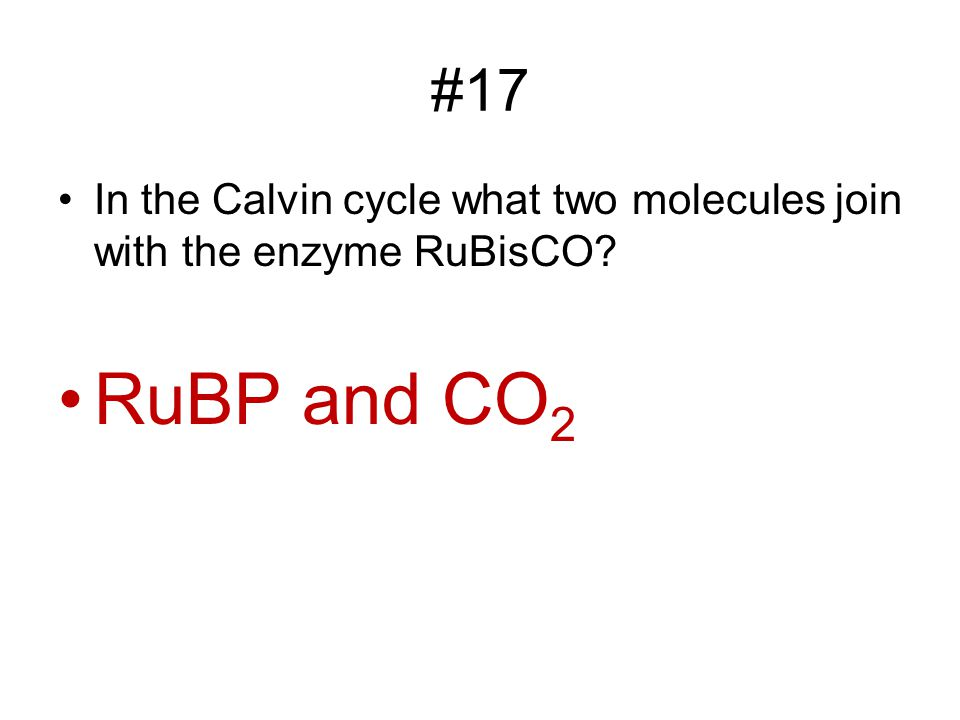 #17 In the Calvin cycle what two molecules join with the enzyme RuBisCO RuBP and CO2