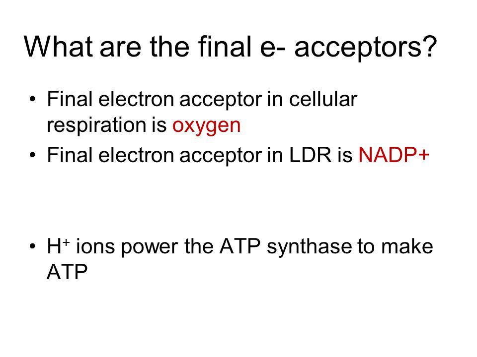 What are the final e- acceptors