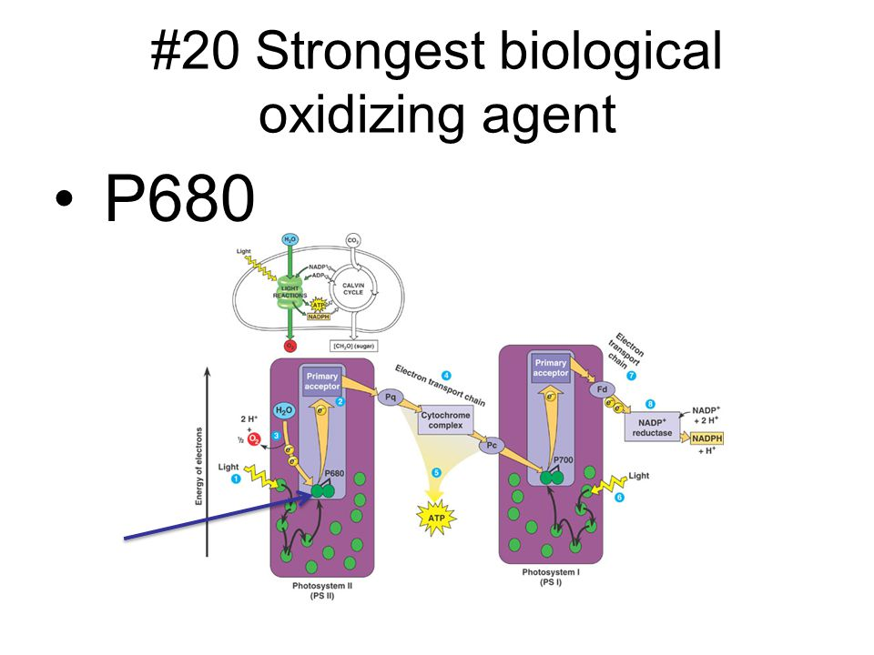 #20 Strongest biological oxidizing agent
