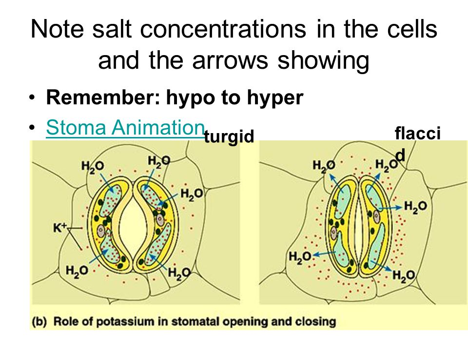 Note salt concentrations in the cells and the arrows showing