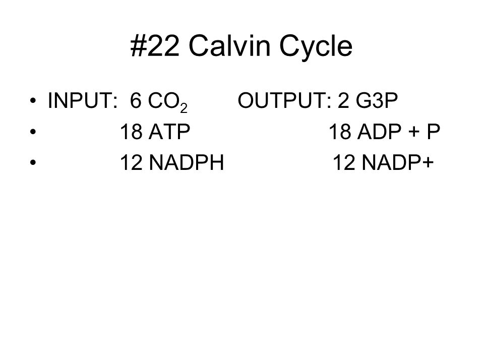 #22 Calvin Cycle INPUT: 6 CO2 OUTPUT: 2 G3P 18 ATP 18 ADP + P