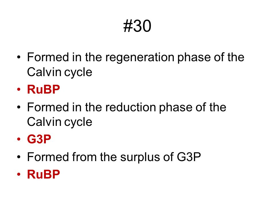 #30 Formed in the regeneration phase of the Calvin cycle RuBP