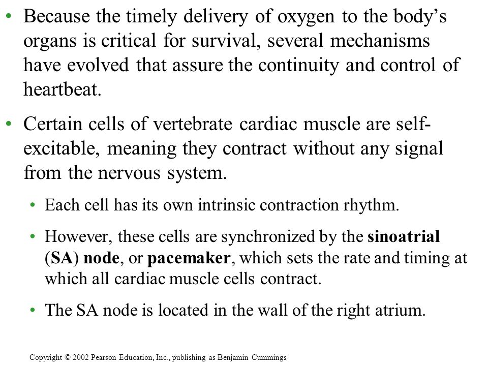 Because the timely delivery of oxygen to the body's organs is critical for survival, several mechanisms have evolved that assure the continuity and control of heartbeat.