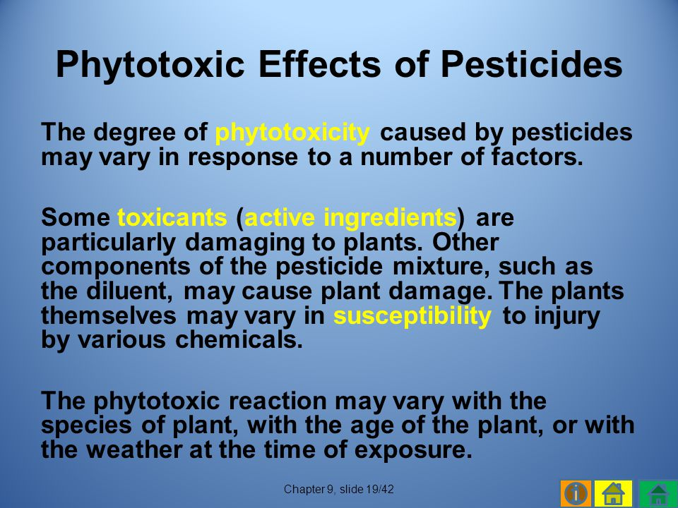 Phytotoxic Effects of Pesticides
