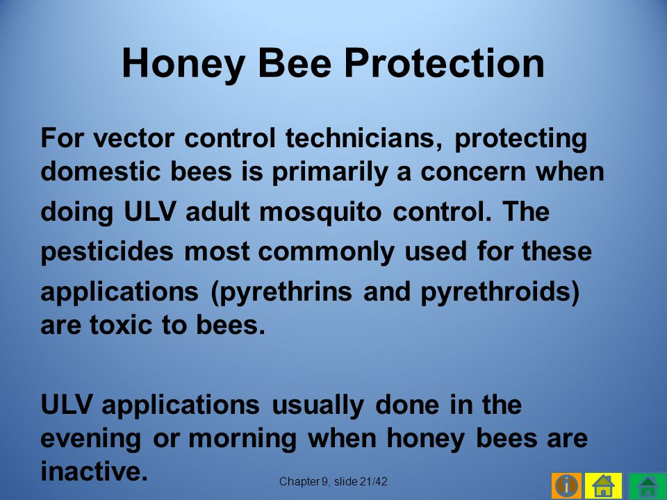 Honey Bee Protection