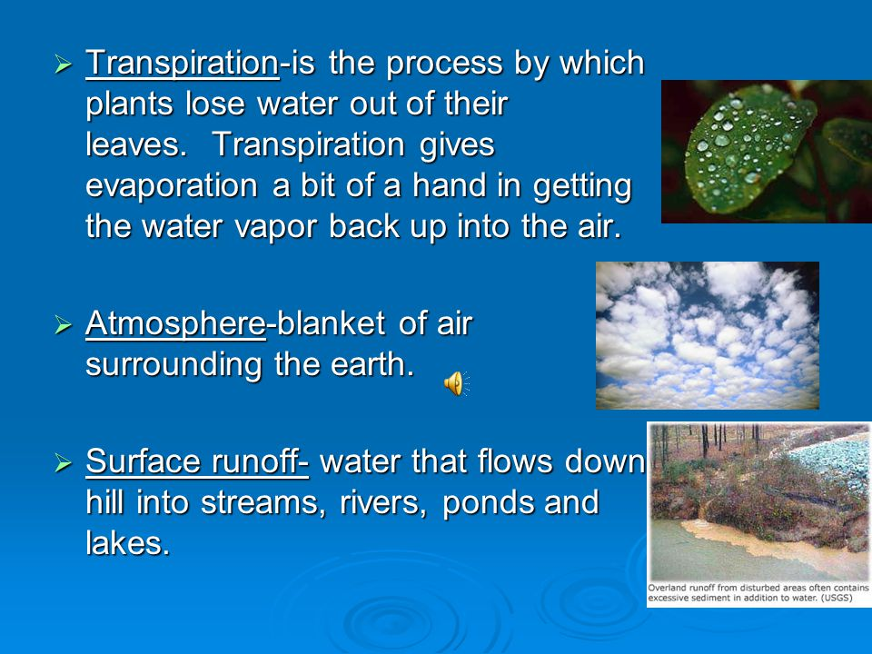 Transpiration-is the process by which plants lose water out of their leaves. Transpiration gives evaporation a bit of a hand in getting the water vapor back up into the air.