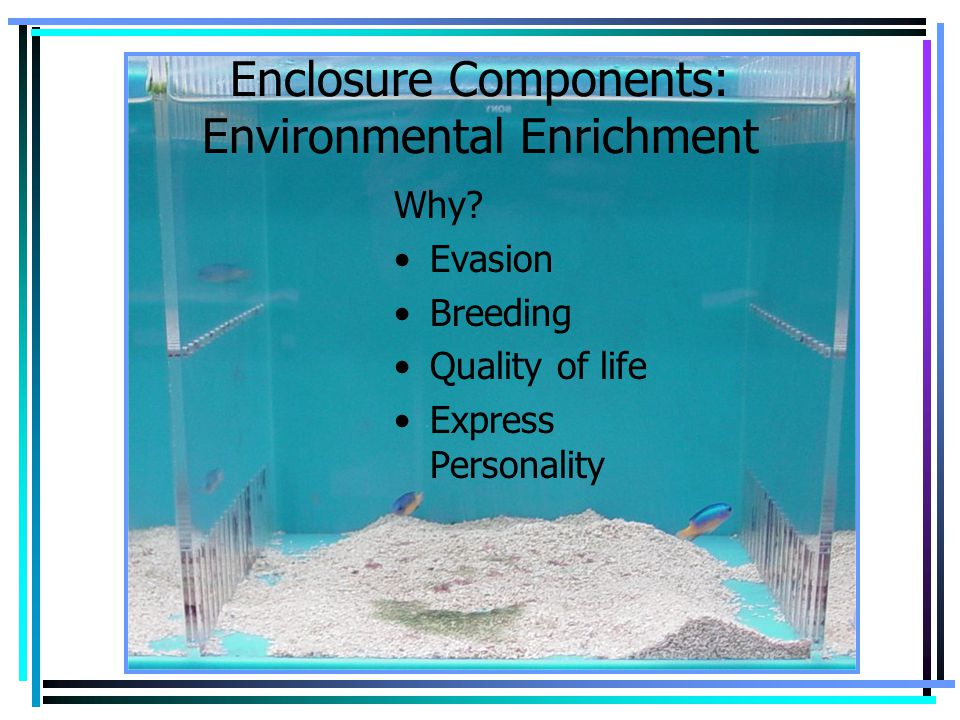 Enclosure Components: Environmental Enrichment