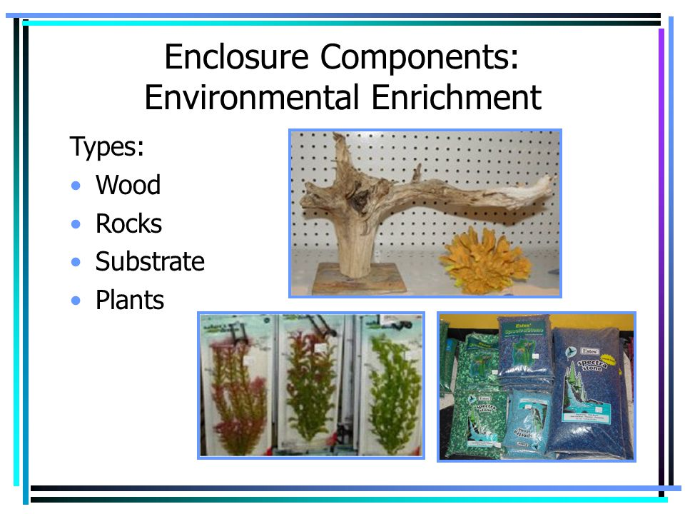 Enclosure Components: Environmental Enrichment