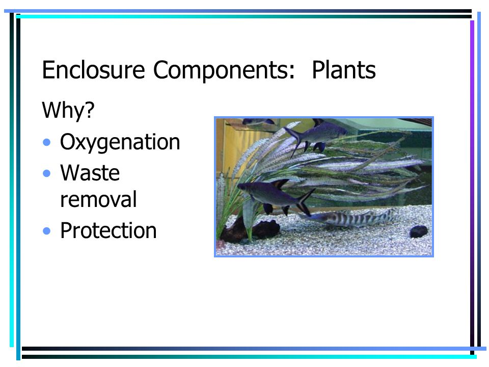 Enclosure Components: Plants