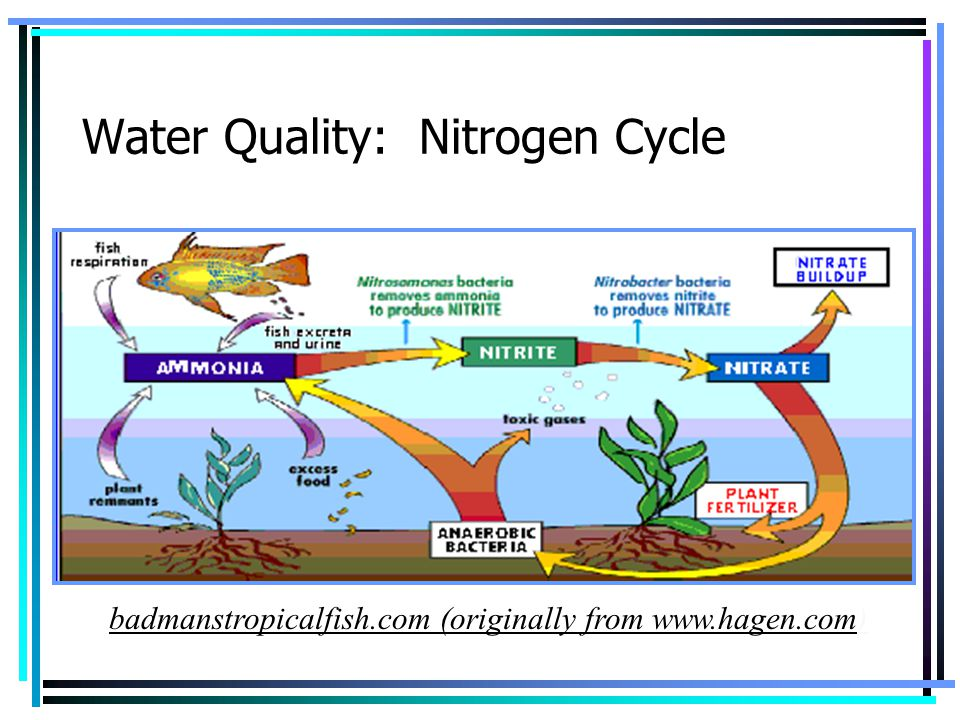 Water Quality: Nitrogen Cycle
