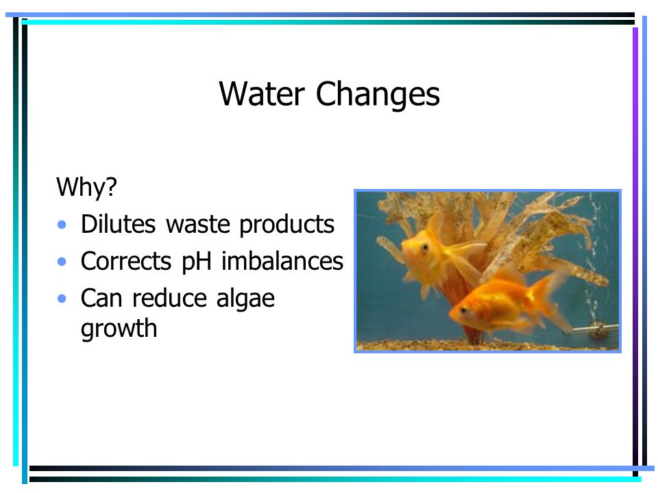Water Changes Why Dilutes waste products Corrects pH imbalances