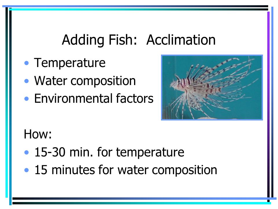 Adding Fish: Acclimation