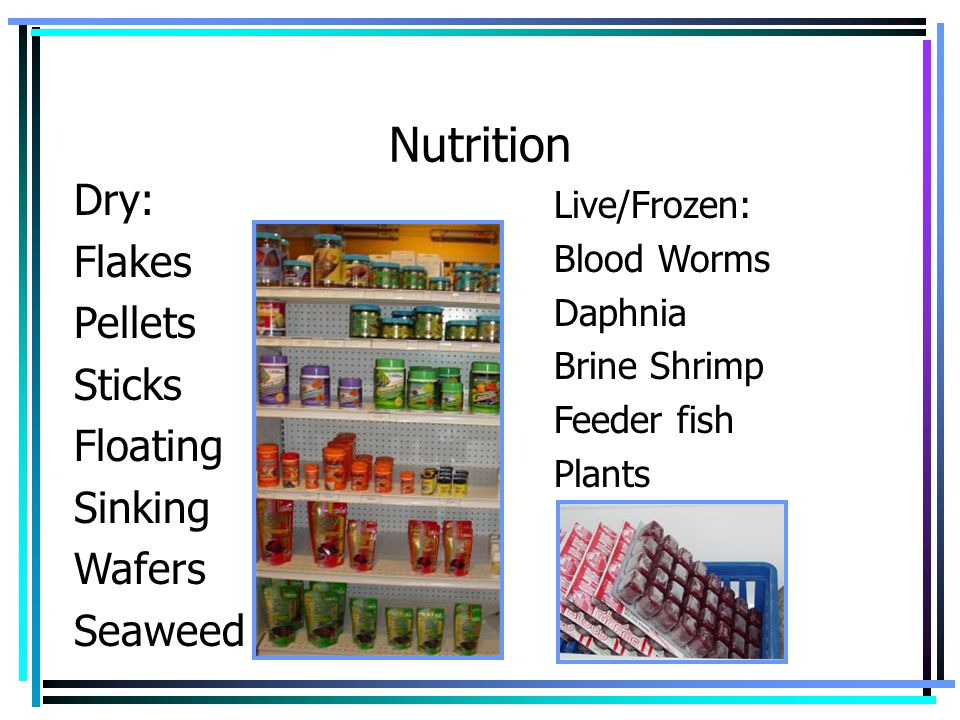 Nutrition Dry: Flakes Pellets Sticks Floating Sinking Wafers Seaweed
