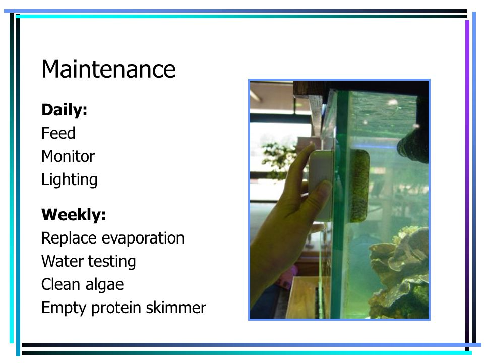 Maintenance Daily: Feed Monitor Lighting Weekly: Replace evaporation