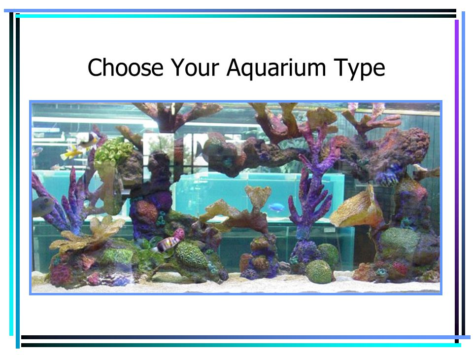 Choose Your Aquarium Type