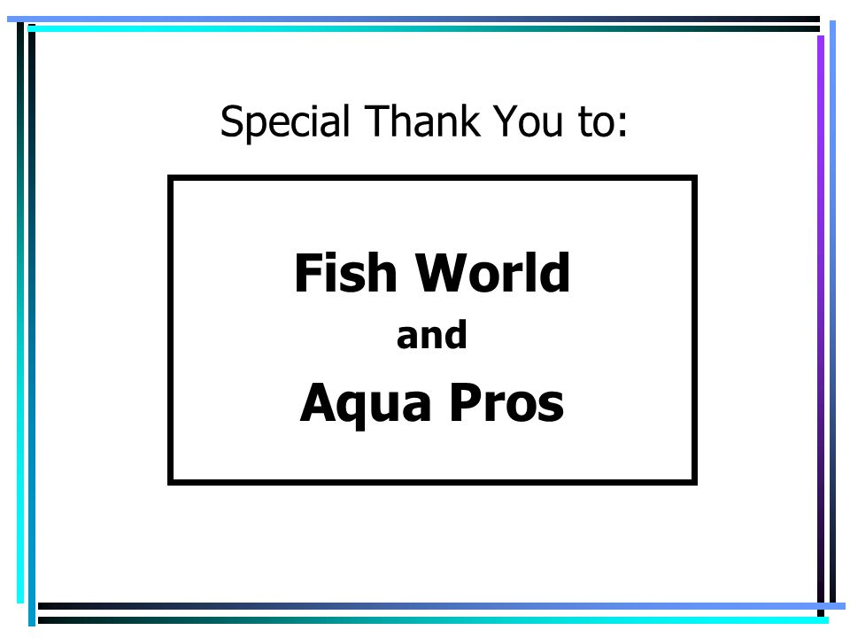 Special Thank You to: Fish World and Aqua Pros