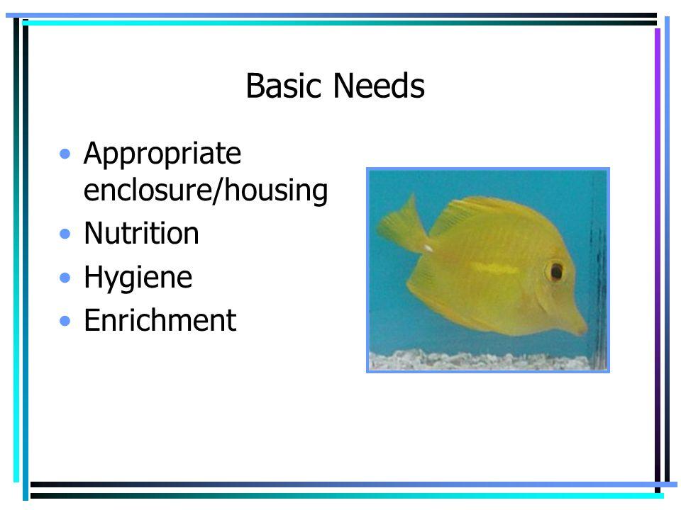 Basic Needs Appropriate enclosure/housing Nutrition Hygiene Enrichment