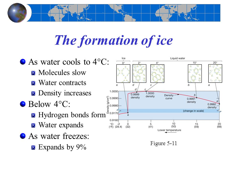 The formation of ice As water cools to 4°C: Below 4°C: