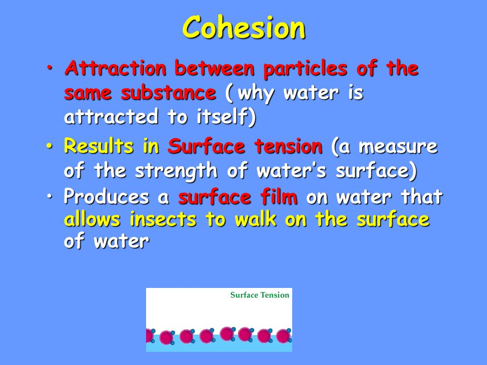 Cohesion Attraction between particles of the same substance ( why water is attracted to itself)
