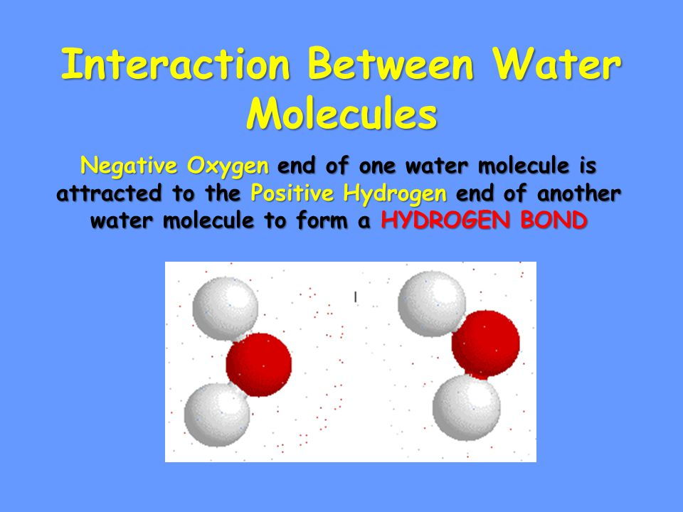 Interaction Between Water Molecules