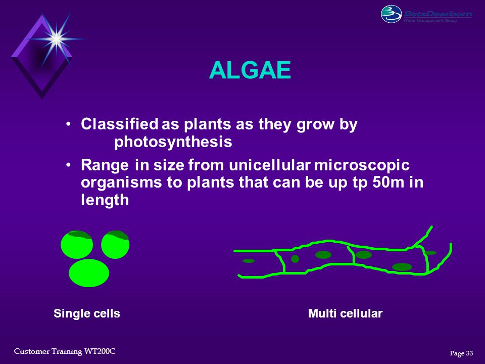 ALGAE Classified as plants as they grow by photosynthesis