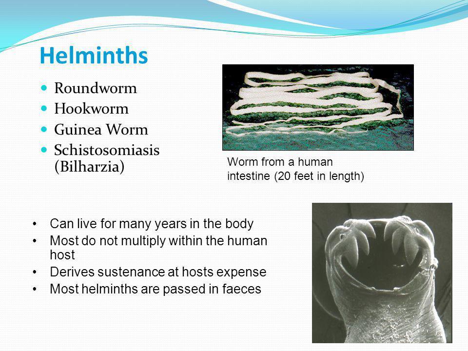 Helminths Roundworm Hookworm Guinea Worm Schistosomiasis (Bilharzia)