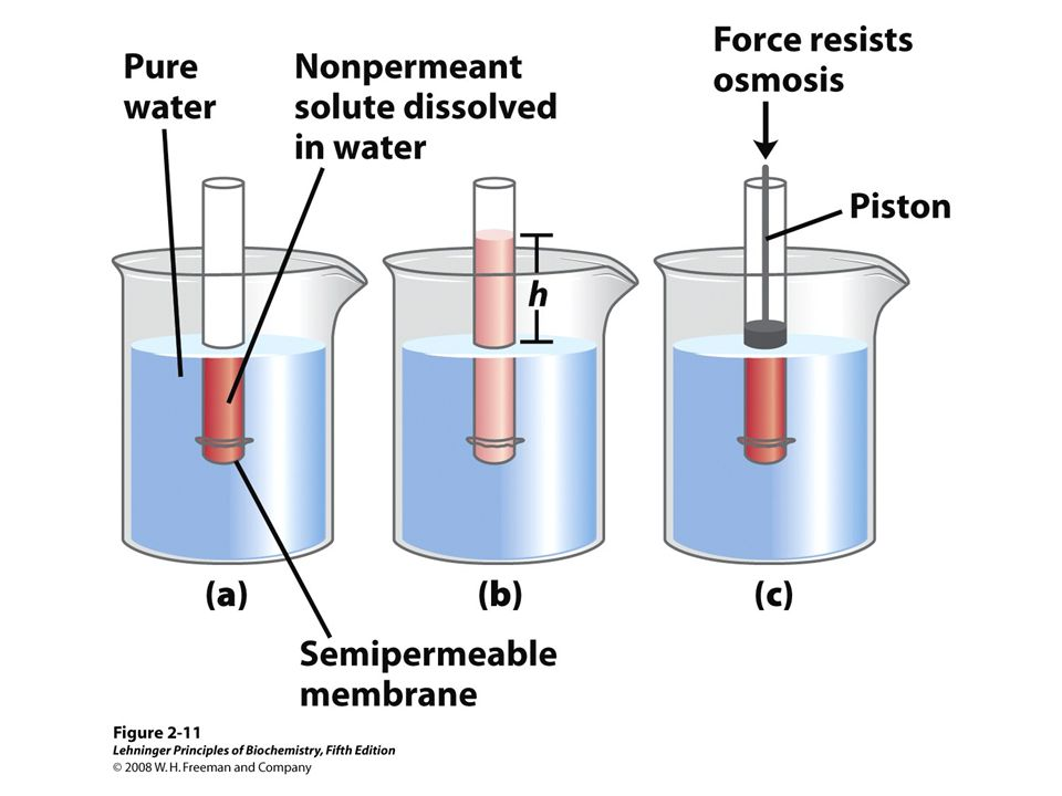 FIGURE 2-11 Osmosis and the measurement of osmotic pressure
