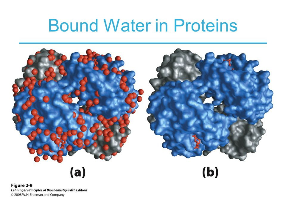 Bound Water in Proteins