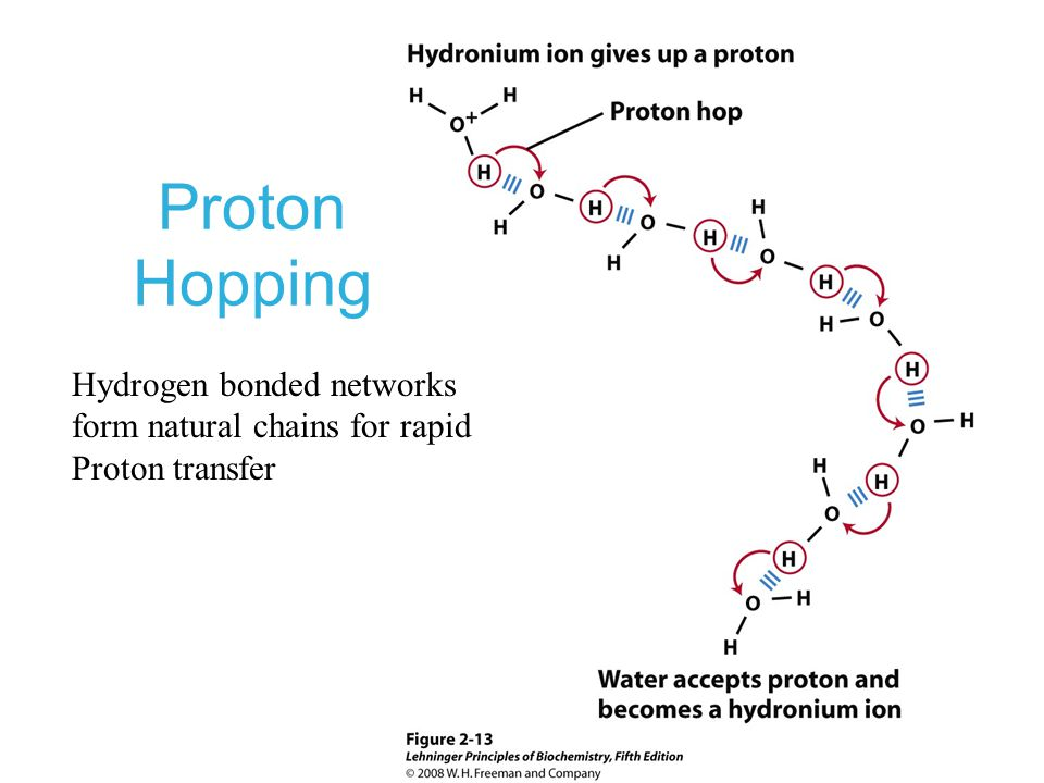 Proton Hopping Hydrogen bonded networks form natural chains for rapid Proton transfer