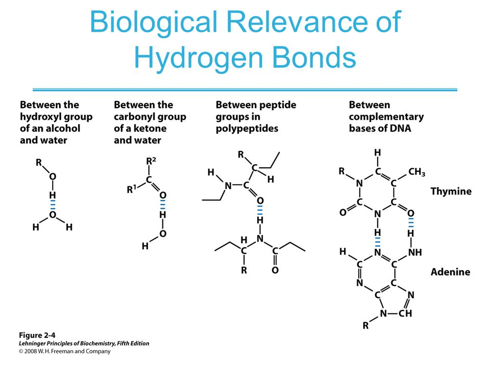 Biological Relevance of Hydrogen Bonds