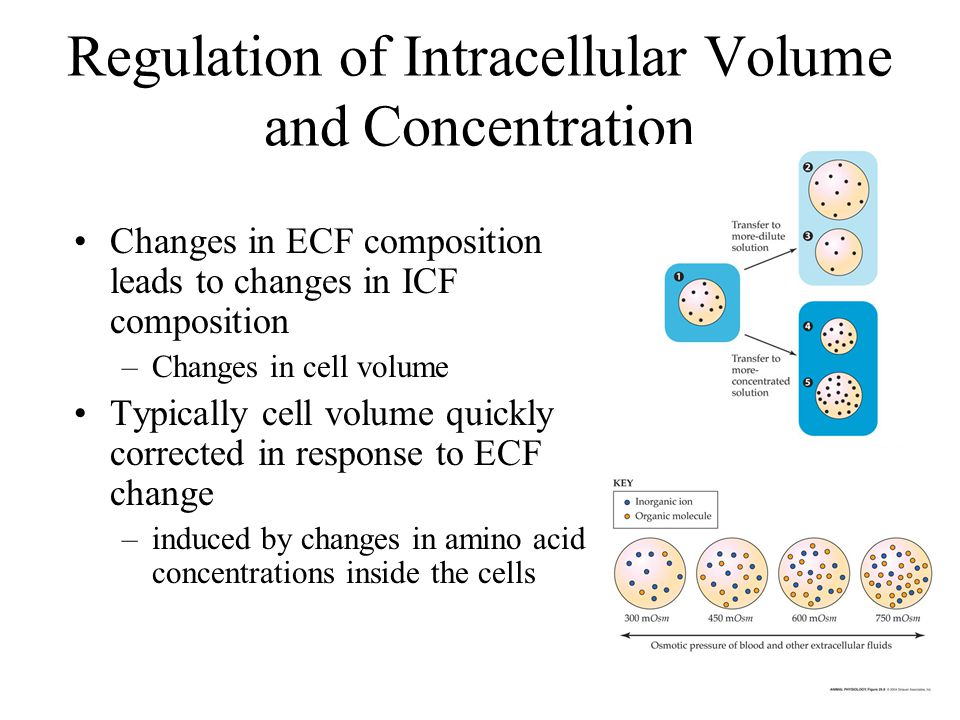 Regulation of Intracellular Volume and Concentration