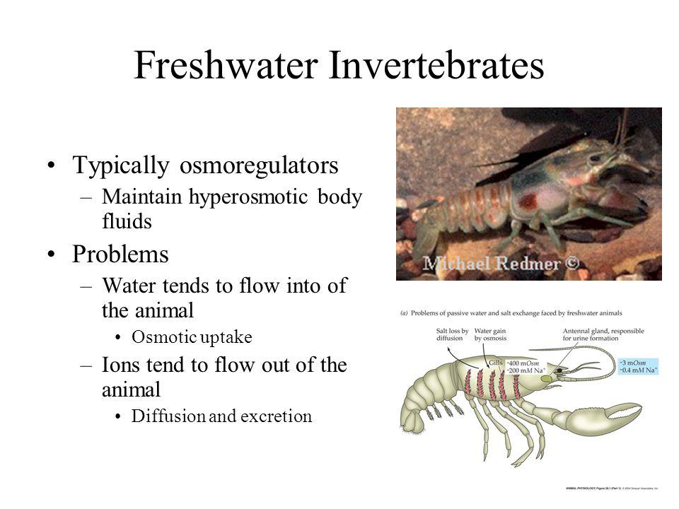 Freshwater Invertebrates