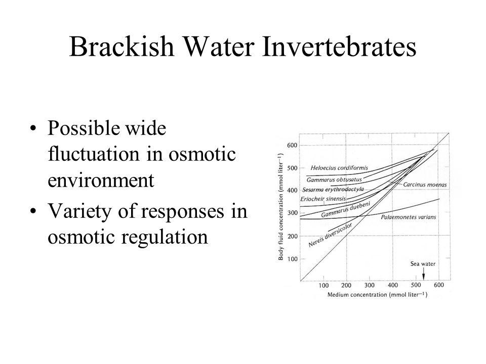 Brackish Water Invertebrates