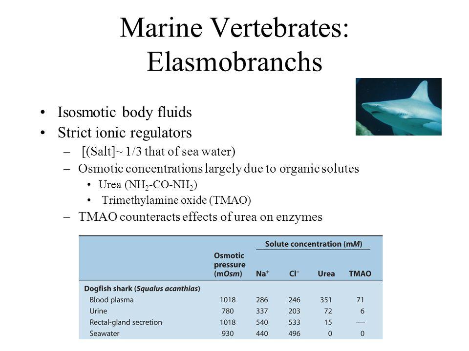 Marine Vertebrates: Elasmobranchs