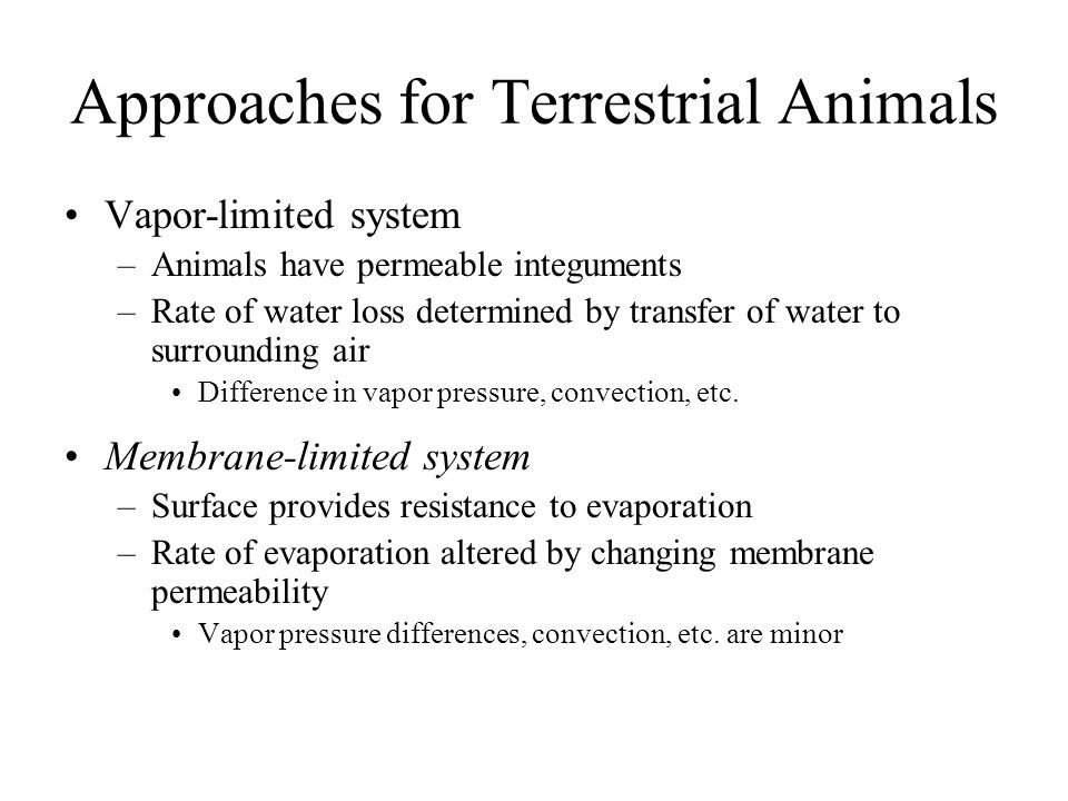 Approaches for Terrestrial Animals