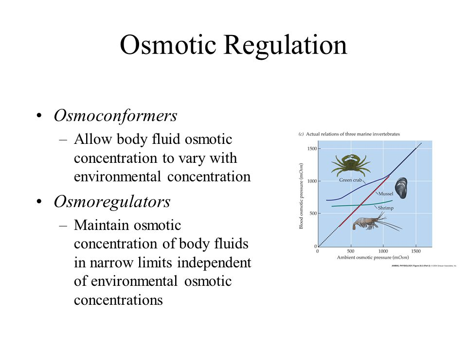 Osmotic Regulation Osmoconformers Osmoregulators