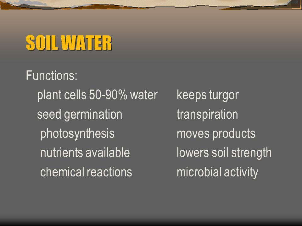 SOIL WATER Functions: plant cells 50-90% water keeps turgor