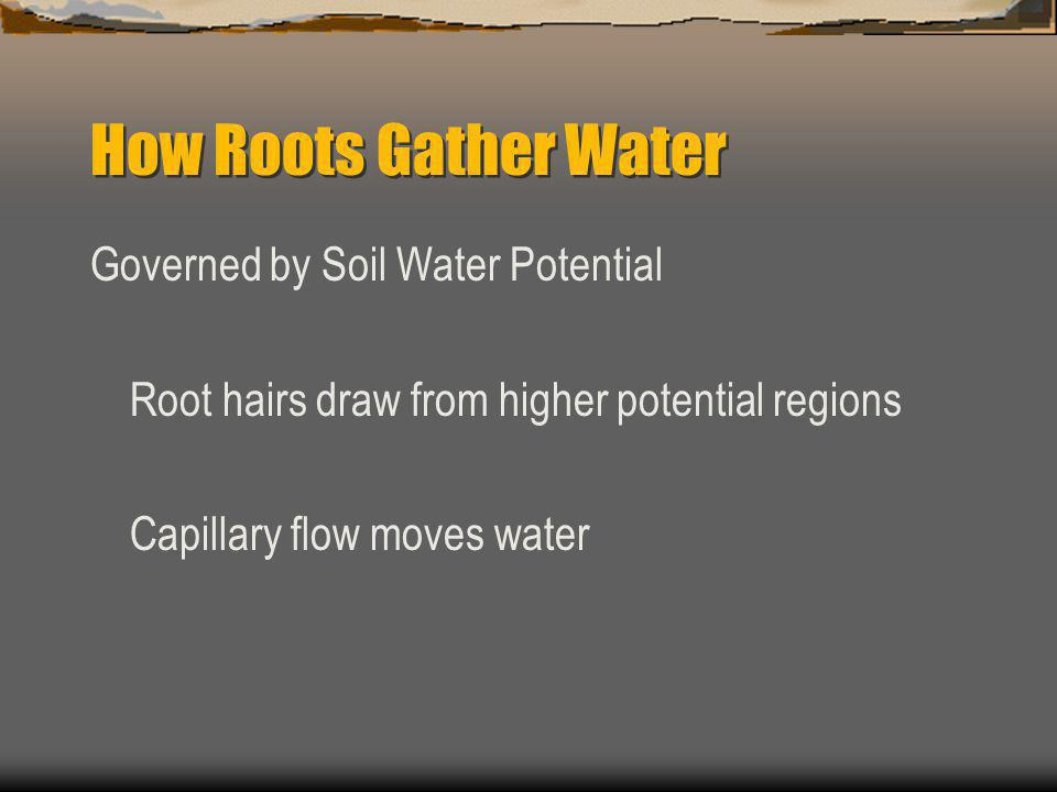 How Roots Gather Water Governed by Soil Water Potential