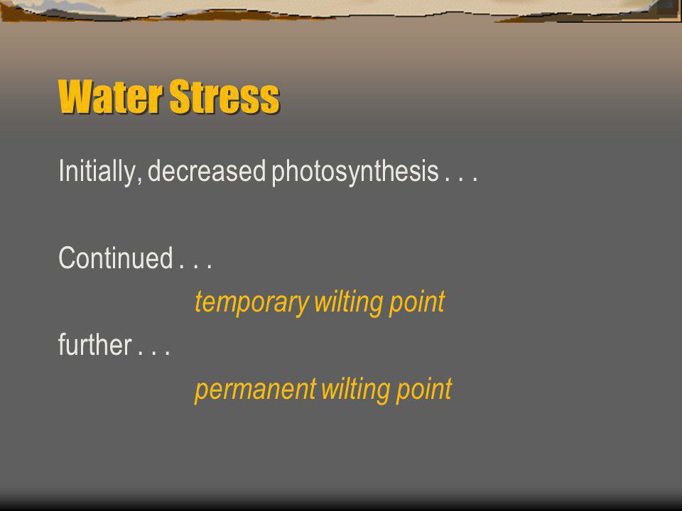 Water Stress Initially, decreased photosynthesis . . . Continued . . .