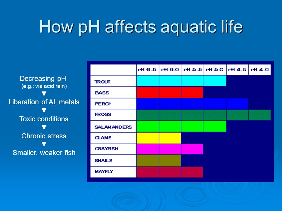 How pH affects aquatic life