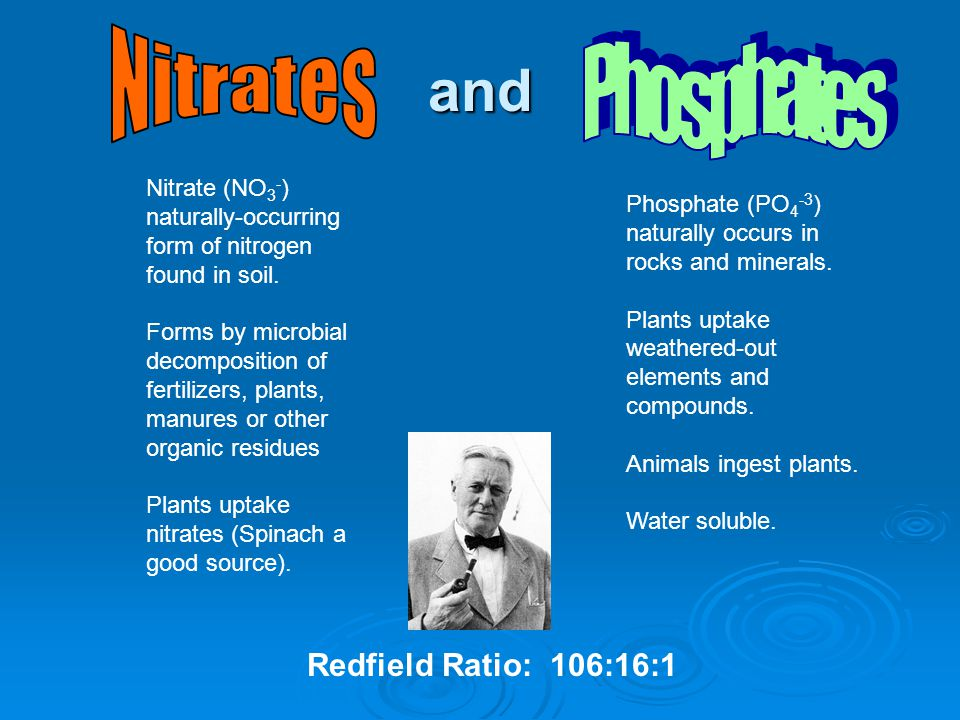 and Nitrates Phosphates Redfield Ratio: 106:16:1 Nitrate (NO3-)